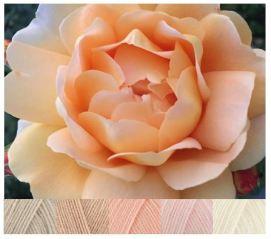 MB SmallPeach rose DK