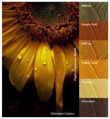 MB fall-sunflower